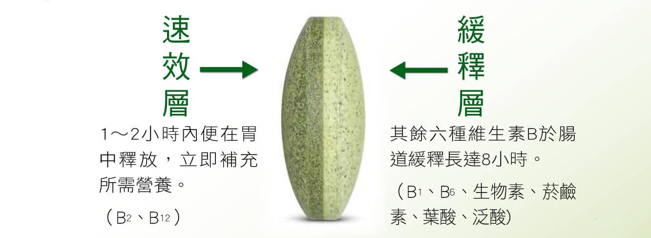 速效層1~2小時內便在胃中釋放,立即補充所需營養。(B2、B12) 緩釋層 其餘六種維生素B於腸道緩釋長達8小時。 (B1、B6、生物素、菸鹼素、葉酸、泛酸)