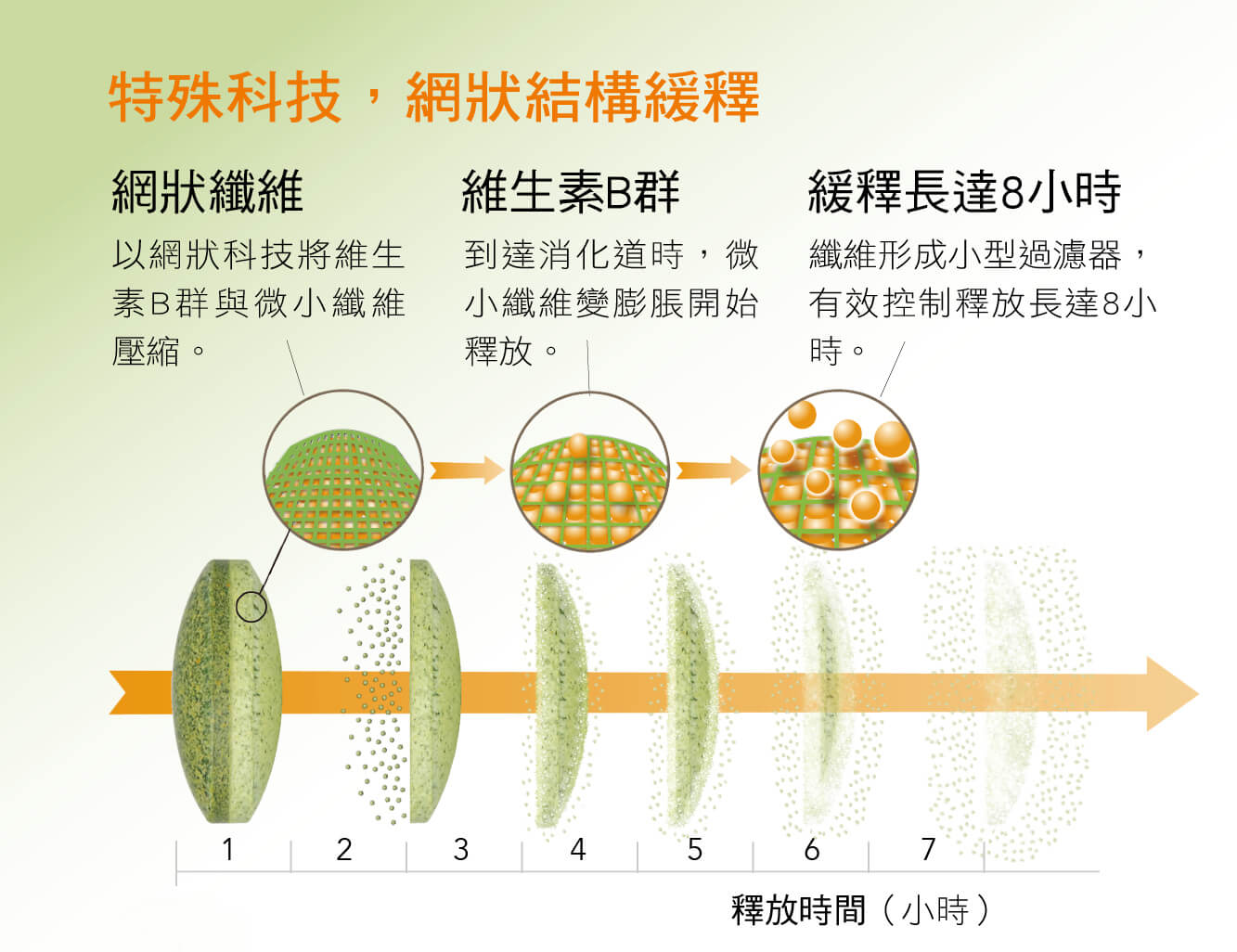 特殊科技,網狀結構緩釋 網狀纖維 以網狀科技將維生素B群與微小纖維壓縮。 維生素B群 到達消化道時,微小纖維變膨脹開始釋放。 纖維形成小型過濾器,有效控制釋放長達8小時。 緩釋長達8小時 纖維形成小型過濾器,有效控制釋放長達8小時。